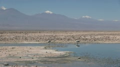 Atacama Laguna de Chaxa flamingos s25 Stock Footage
