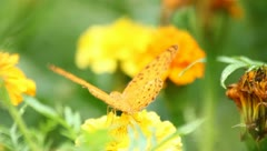 Butterfly with yellow flowers and a garden with green leaves. Stock Footage