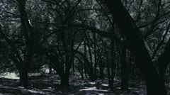 Creepy Thicket Stock Footage