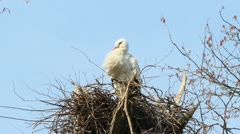 Stork yawning on its nest Stock Footage