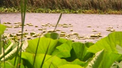 Plants on water-2 Stock Footage