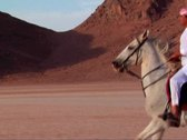 VJ89 vj loop of a Bedouin riding a white horse Stock Footage