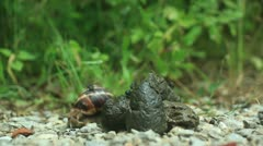 Snail and a piece of shit _1 - stock footage