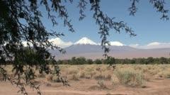 Atacama The Andes range seem beyond a thorn tree Stock Footage