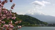 Stock Video Footage of Mt. Fuji and Cherry Blossoms