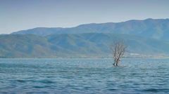 Scenery with lake and flooded tree Stock Footage