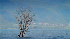 Scenery with a flooded tree Stock Footage