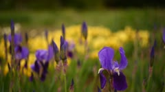 Bed of flowers Stock Footage