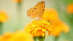 butterfly with yellow flowers and a garden with green leaves. - stock footage