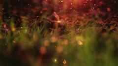 Magical abstract background agriculture bugs above cultivated soil - stock footage