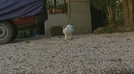 Stock Video Footage of Bella, oldest cat in Rome takes a stroll (catcam)