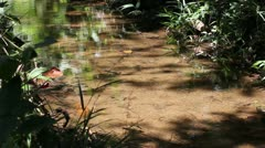 A tranquil stream with small fish in the Peruvian Amazon Stock Footage