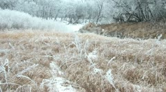 White River Trees with Brown Grass in Winter Stock Footage