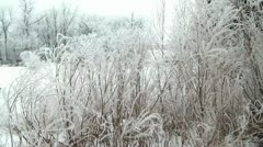 Beautiful Frost on Trees Near River Bank Stock Footage