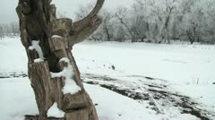 White Trees By the Snowy River Stock Footage