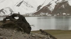 Eerie atmosphere around Karakul lake, skull of a dead animal Stock Footage