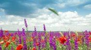 Blooming Spring Field Stock Footage