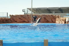 Dolphins show in Marineland, Mallorca, Spain NTSC Stock Footage