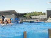 Dolphins show in Marineland, Mallorca, Spain, slow motion NTSC Stock Footage