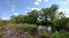 Vivid Time Lapse of a Tranquil Pond and Willow Trees with Clouds Rushing Past Stock Footage