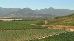 Chile Santa Cruz vineyards and Andean foothills - stock footage