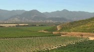 Chile Santa Cruz vineyards and Andean foothills Stock Footage