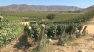 Chile Santa Cruz vineyards Stock Footage