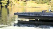Lake Merritt in Oakland - 3 Shots Stock Footage