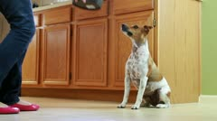 Woman feeding her dog in the kitchen Stock Footage