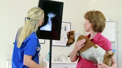 Young vet shows dog owner xray Stock Footage