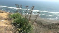 Chile coast near Matanzas with plants Stock Footage