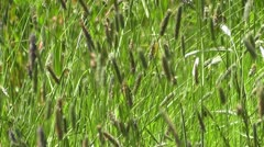 Waving Grass 1 Stock Footage
