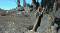 Chile coast range burned over Stock Footage