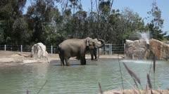 Elephants in water in the zoo Stock Footage