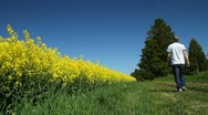 Man walking besides a rapeseed field Stock Footage