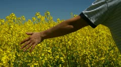 Hand in a rapeseed field - stock footage