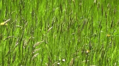 Waving Grass 2 Stock Footage