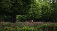 Beautiful Deer Stock Footage