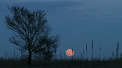 Full Moon behind Tree - stock footage