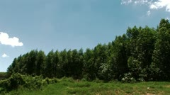 Eucalyptus Trees Stock Footage