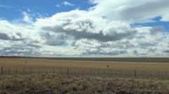 Patagonia plains rheas s Stock Footage