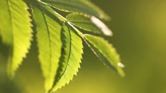 Green fresh leaves Stock Footage