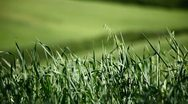 Stock Video Footage of Field of green grass on a hill