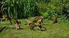 Dead head apes - stock footage