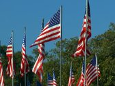Stock Video Footage of Large grouping of American flags