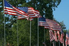 Group of American flags lined up in rows Stock Footage