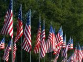 Stock Video Footage of Large grouping of American flags lined up in rows
