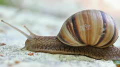 Snail creeping by stone Stock Footage