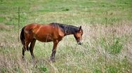 Horse on the glade Stock Footage