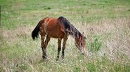 Lonely horse Stock Footage